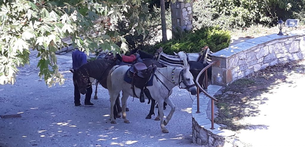 Pelion Resort Horse Riding